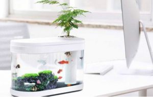 Xiaomi Fish Tank launched in China for around Rs 3,050